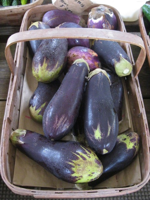 eggplants at farm